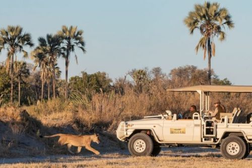 Xigera Safari Lodge Partners With Wild Entrust Africa