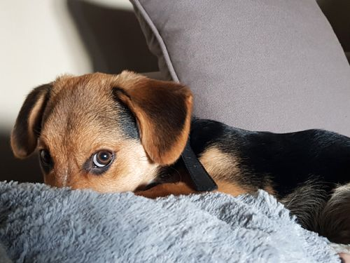 A Beginner's Guide to Vet Care: How to Help A Dog Recover from An Injury