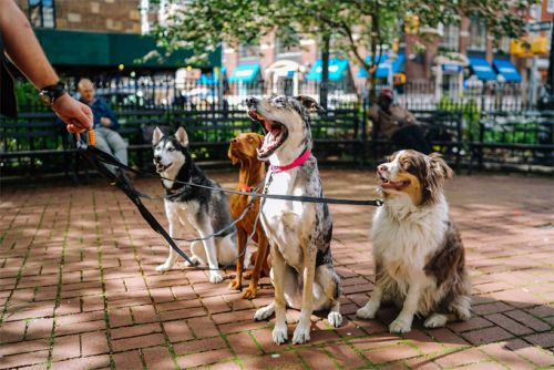 6 Dog Training Mistakes You are Probably Doing